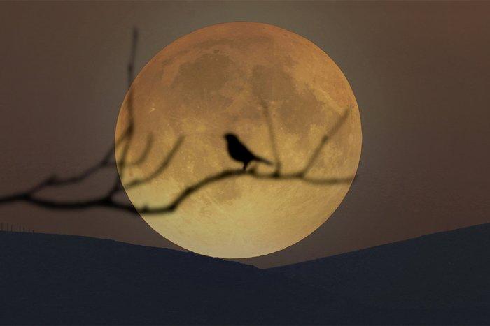 Особенности заговоров при полной луне