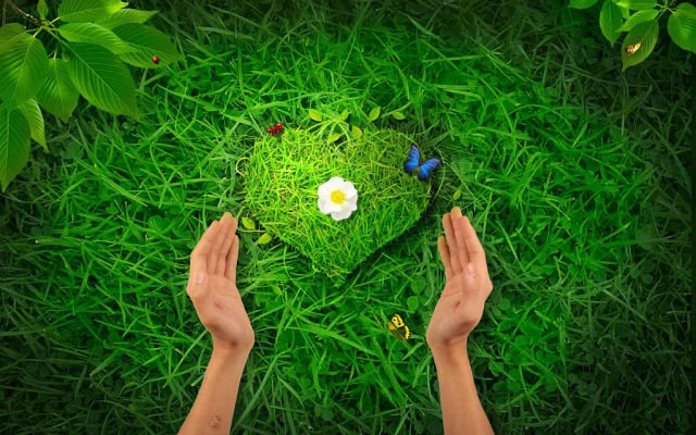 Растения, притягивающие любовь