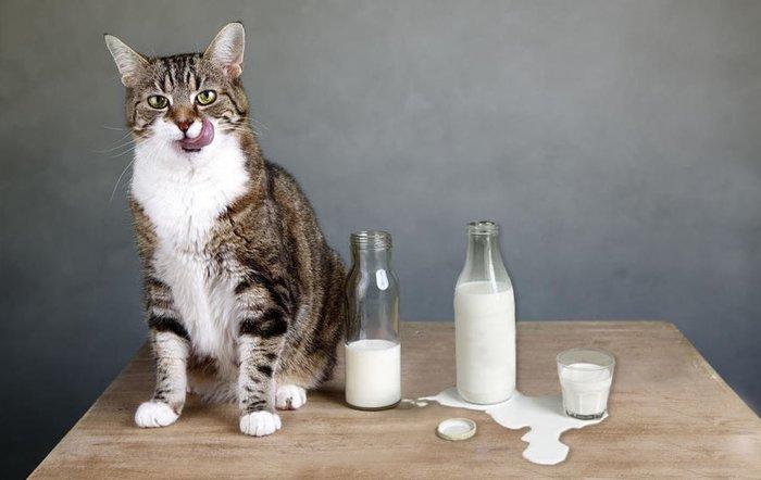 Кот - магический помощник