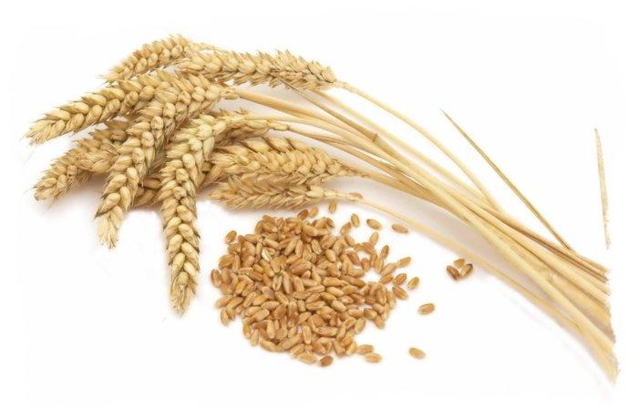 Зерно и колосья