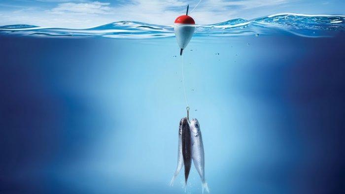 Рыбы клюют на наживку